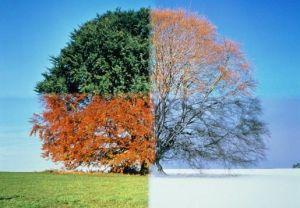 season-change