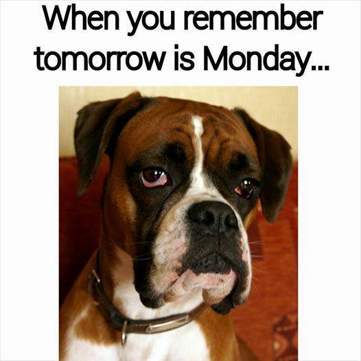 tomorrow-is-monday-boxer